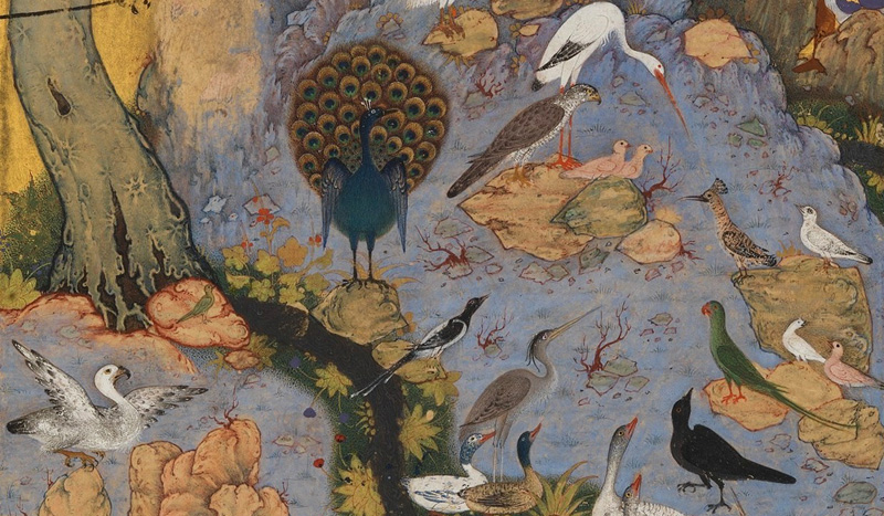 The hoopoe instructing the other birds, in a scene from a Seventeenth-Century manuscript of Farīd od-Dīn ʿAṭṭār's The Conference of the birds. Source: Wikipedia.