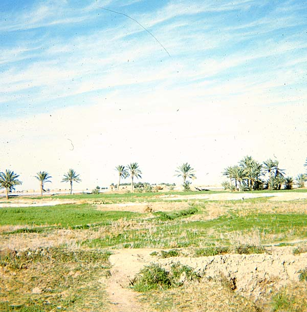 al-Baṭḥā, a contemporary settlement in the Sawād, on the banks of the Euphrates River.